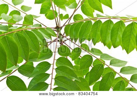 Green Nature Leaves