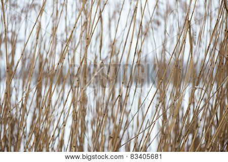 Frozen Abstract Tree Branches And Grass