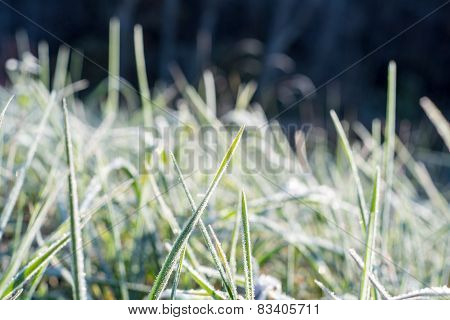 Close Up Photo Of Frosty Morning Grass, Chilling Morning