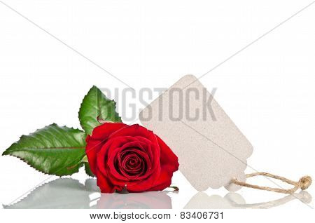red rose with empty tag for your text on white background