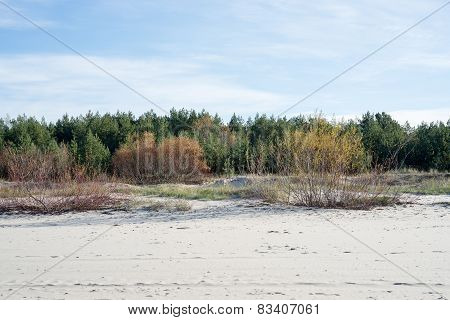 Late Fall Colors In Dunes Near The Sea