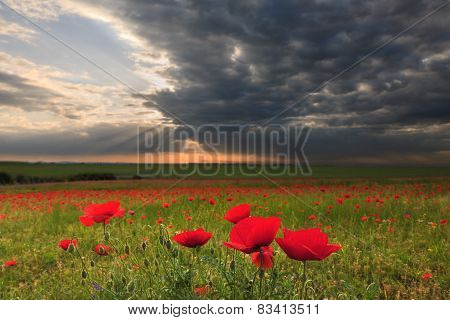 Dramatic Clouds Over Poppy Field At Sunset