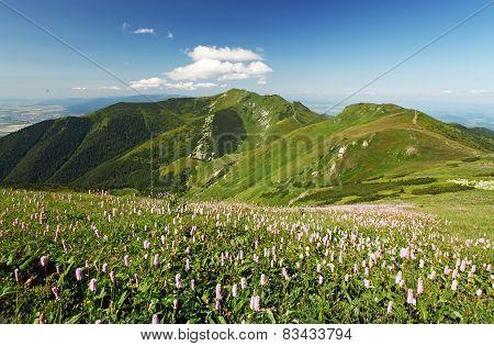Green Mountain With Wild Flowers Meadow - Mala Fatra