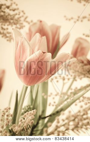 Spring Bouquet With A Mimosa And Tulips