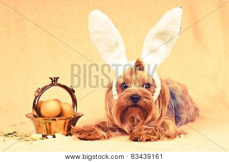Cute Dog Like Easter Bunny