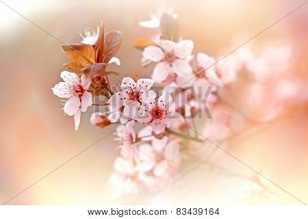 Soft focus on flowering branch of tree