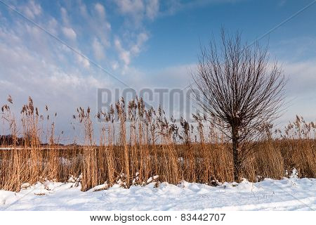 Winter On A Lake