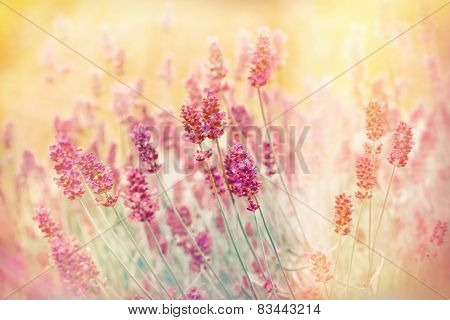 Soft focus on lavender with color filters