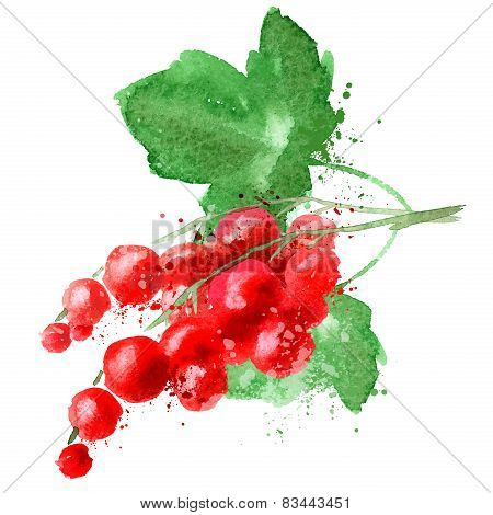 red currant vector logo design template. fruit or food icon.