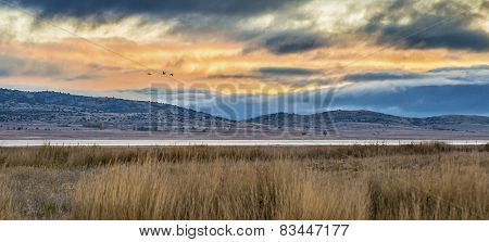 Cranes Migrating Over Gallocanta Lagoon In, Spain