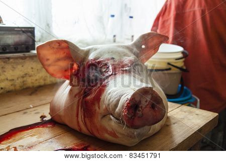 Head Of Death Pig