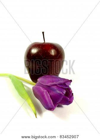 apple with tulip