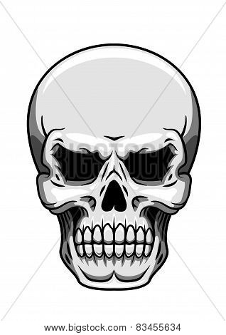Gray human skull on white