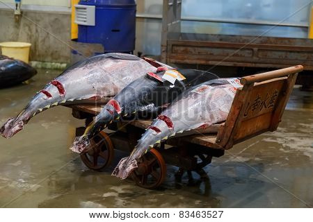 Tunas Put for an Auction at Osaka Central Wholesale Market