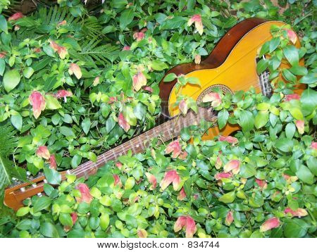 Overgrown Guitar