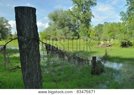 Wet Meadow And Riparian Forest Oxbow Lake. Vistula Valley. Spring, Freshness And Juiciness