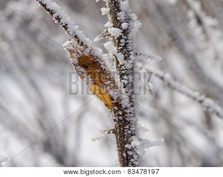 Winter Branch