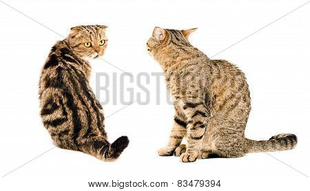 Two cats, looking at each other