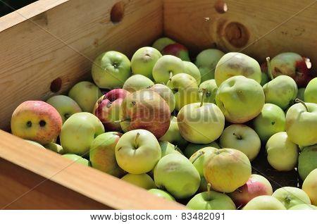 Apples in wooden box in a garden.