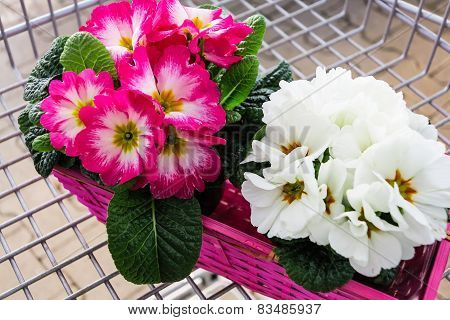 Spring in shopping trolley