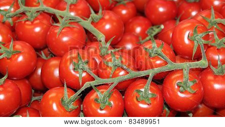 Red Vine Tomatoes.