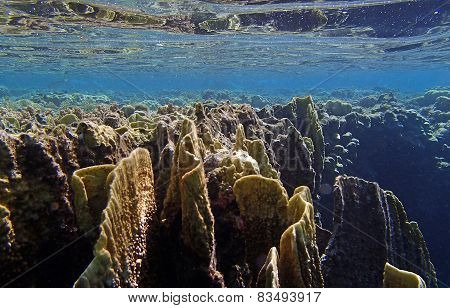 Amazing Red Sea Snorkeling