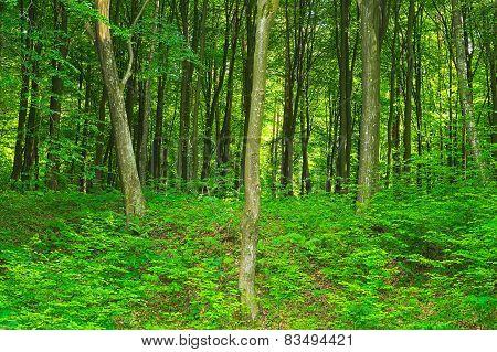 Hornbeam Forest Green Scenery