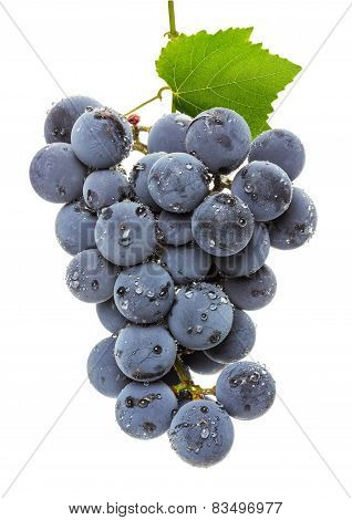 Juicy Grapes Isolated On The White Background