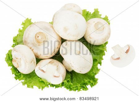 Champignons Isolated On The White Background