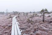 stock photo of frostbite  - wooden boardwalk in frosty winter bog landscape with frozen nature - JPG
