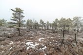 picture of frostbite  - snowy landscape in frosty winter bog in country side - JPG