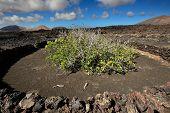 image of volcanic  - wild volcanic landscape at Timanfaya National Park Lanzarote Island Canary Islands Spain - JPG