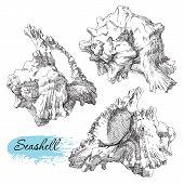 foto of beach shell art  - Beauty set of various sea shells vector - JPG