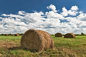image of hayfield  - Haystacks on the summer hayfield in a sunny day - JPG