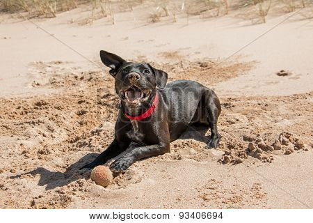 Black dog with ball