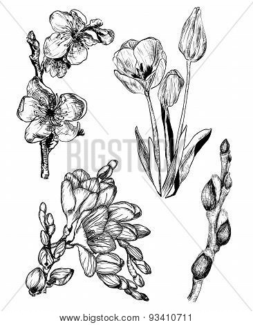 Spring Flowers In Sketch Style: Sakura, Tulip, Freesia And Willow Buds