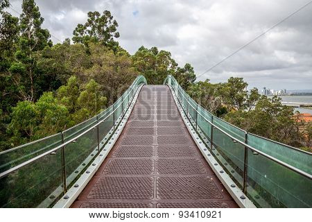 A Hanging Walking Bridge Over The Trees In Kings Park In Perth