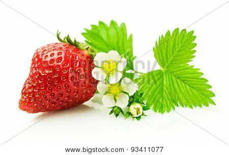 Ripe Strawberry With Leaf And Blossom