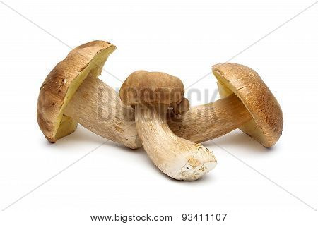 Fresh Wild Mushrooms Isolated On White Background