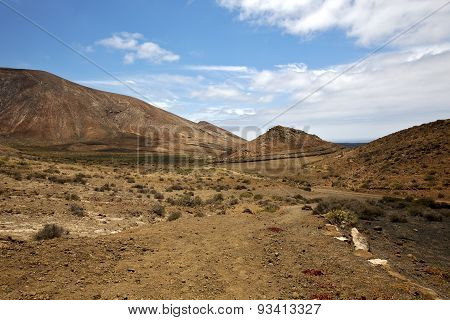 Flower  Plant  Bush   In Los Volcanes   Hill And Summer  Lanzarote Spain