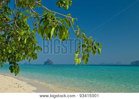 Tree Growing At  The Beach In Thailand