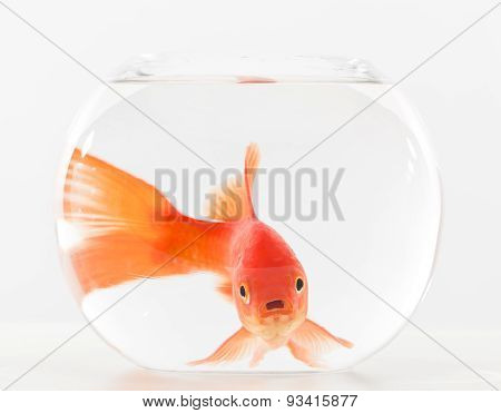 goldfish in small fishbowl