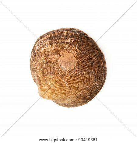 One Sea Shell