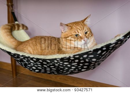 Cat Lying In A Fur Hammock