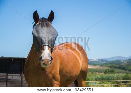 Horse With Fly Screen