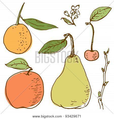 Fruits vector set