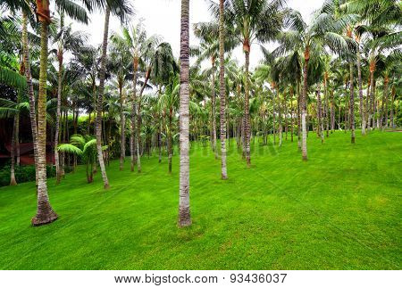 palm grove in Loro park, Tenerife, Spain