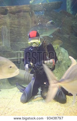 SOCHI, RUSSIA - JUL 24, 2014: Diver in the aquarium with fish at the Oceanarium Sochi Discovery World Aquarium
