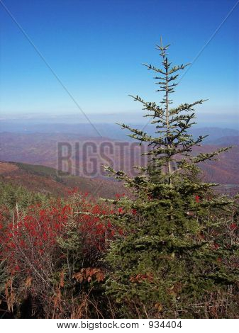 Christmas Tree In The Mountains 2