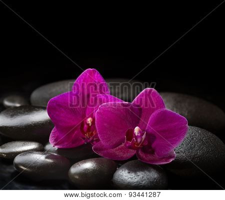 Two orchids lying on black stones. Spa concept.  LaStone Therapy
